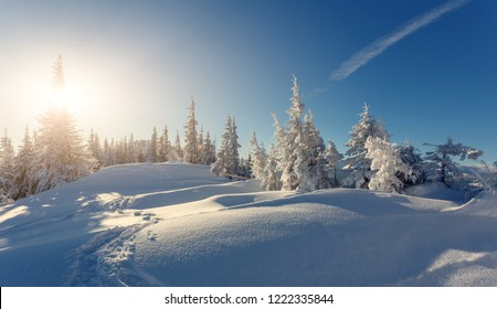 Splendid winter forest landscape in sunny day. Icy snowy fir trees glowin in sunlight. winter holiday concept. travel day. wonderland in winter. Amazing Nature background. Christmas holiday concept