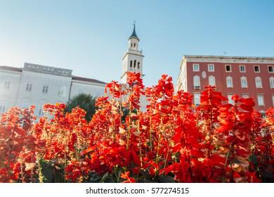 Split, cahtedral & flowers