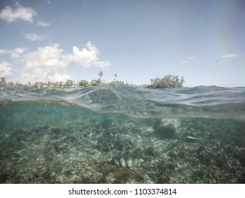 Split half and half view of giant clams under water at clam sanctuary and reserve, Upolu Island, Western Samoa, South Pacific