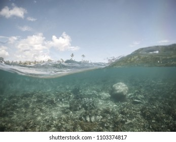 Split half and half view with waves of giant clams under water at clam sanctuary and reserve, Upolu Island, Western Samoa, South Pacific