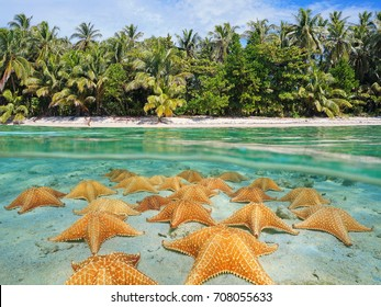 Split image over and under sea surface near the shore of a tropical beach above waterline and a group of starfish underwater on sandy seabed, Caribbean, Panama
