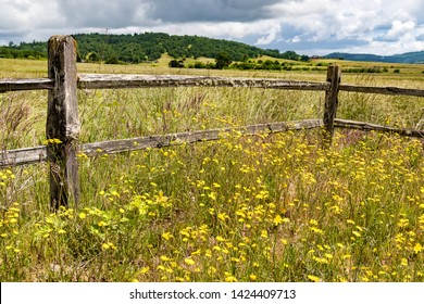 Split rail wooden fence, meadow with spring yellow wildflowers.