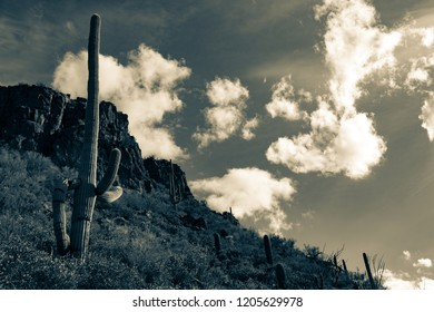 A split tone black and white detail of the Sonoran Desert landscape in Pima County, Tucson, Arizona. Towering saguaro cactus, a hillside covered in cacti leading up to rocky cliffs and beautiful sky.