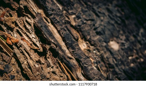 Split tree wood texture macro