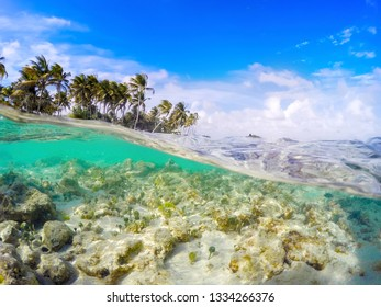 Split underwater view of La Caravelle shore in Guadeloupe, French west indies. Lesser Antilles, Caribbean sea