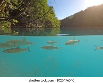 Split view landscape of trouts swimming in azure blue lake