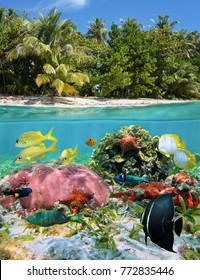 Split view over and under sea surface tropical beach shore and colorful marine life underwater, Caribbean sea