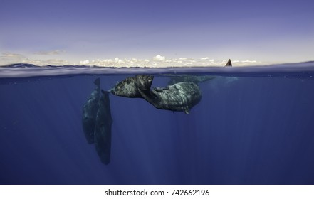 Split view of a pod of sperm whales in a social group showing the sky and below the waterline, north western Mauritius.