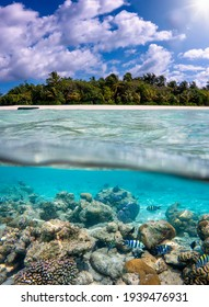 Split view to a tropical island with a colorful reef and fish in the turquoise sea, coconut palm trees on the beach and deep blue sky in the Maldives islands