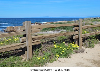 Split-rail fence and yellow flowers of the escaped weed Bermuda buttercup (Oxalis pes-caprae) at Asilomar State Beach on the Monterey Peninsula in Pacific Grove, California