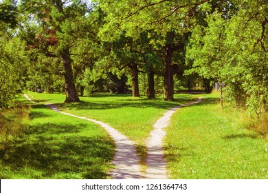 Splitting the footpath in the park. Summer landscape
