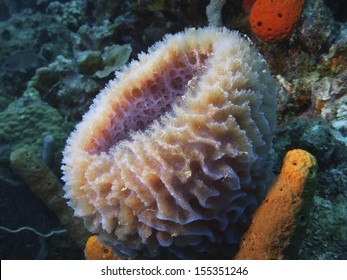 Sponge in the Caribbean sea around Bonaire.