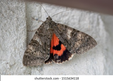 a sponge moth with grey patterned wings hangs on a house wall