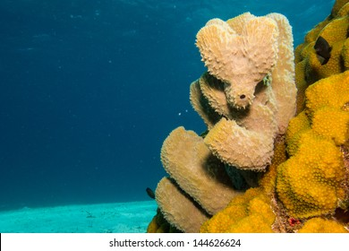 sponges from the coral reefs of the mesoamerican barrier. Mayan Riviera, Mexican Caribbean.