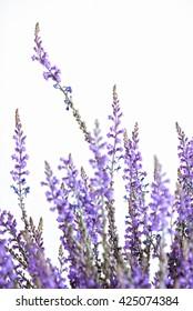 Spontaneous grass with purple flowers