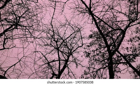 Spooky black bare tree branches high in bloody sky. Atmosphere of horror, fear, murder, creepy Halloween background