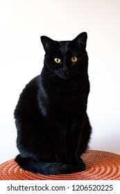 Spooky black cat with gold eyes sitting on an orange disc, against a white background