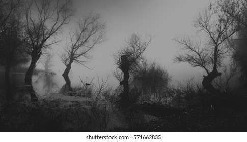 Spooky dark landscape showing silhouettes of trees in the swamp on misty night.