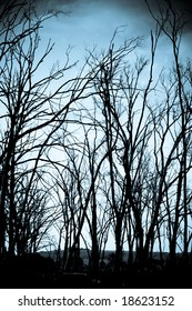 Spooky dead trees in a haunted forest