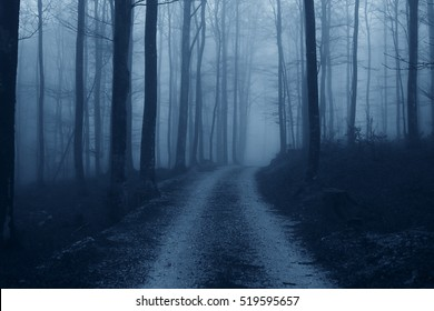 Spooky Eerie Forest in a Fog