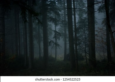 spooky foggy forest 1/4