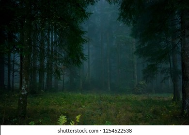 spooky foggy forest 3/4