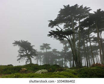 Spooky foggy forest trees