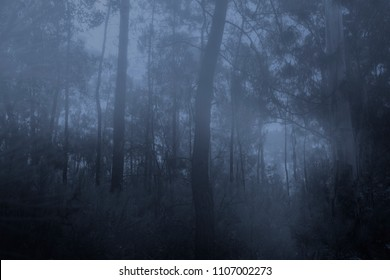 Spooky foggy woods at dusk or night
