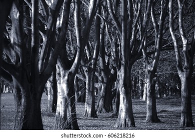 spooky forest landscape with twisted trees on halloween