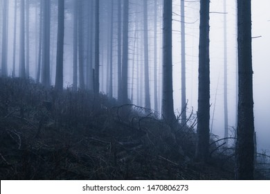 Spooky forest with little light and lots of fog