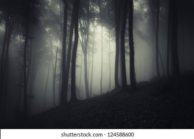 spooky forest at night