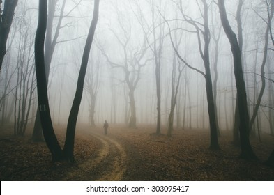 spooky forest road with man and twisted trees