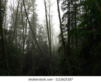 spooky forest with trees centered