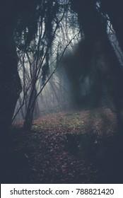 spooky forest - winter season