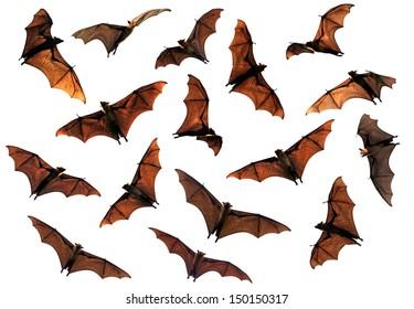 Spooky Halloween flying fox bats circling overhead composite image