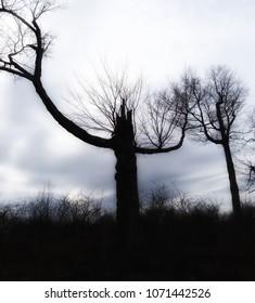 Spooky Haunted Tree