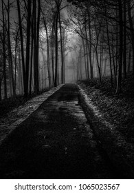Spooky haunting image of a path through the dark foggy forest. Tims Ford State Park in Winchester Tennessee.