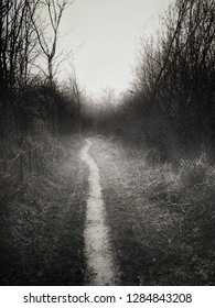 A spooky image of a rural path in a winter woodland, muted sepia tones