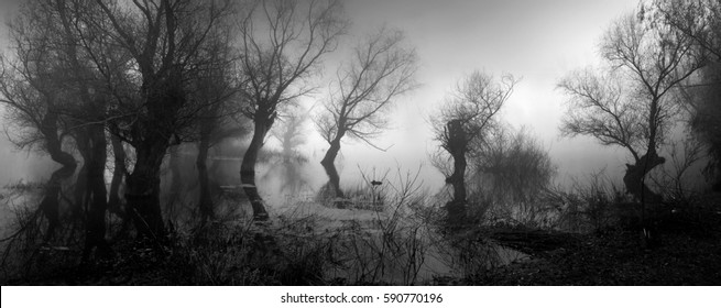 Spooky landscape showing silhouettes of trees in the swamp on misty autumn day.