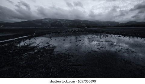 Spooky Landscape in the Twilight