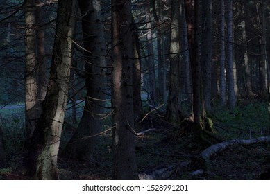 Spooky, mysterious, dark, fogy and wild forest landscape with deep blue shadows
