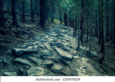 Spooky path in the evening forest. Rocky trail with tree roots and stones