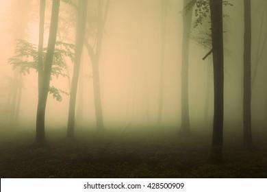 Spooky scene in foggy forest
