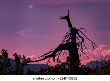 Spooky Silhouette Of Dead Tree Killed By Saltwater Which Flooded Sunken Ground After Earthquake 1964 In Cook Inlet, Alaska