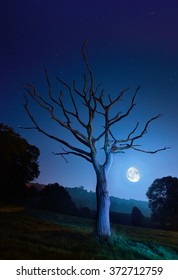 Spooky skeleton tree and full moon on a clear night.