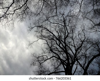 Spooky Tree Branches against a Threatening Sky