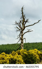 Spooky tree with trees in background and yellow flowers in foreground