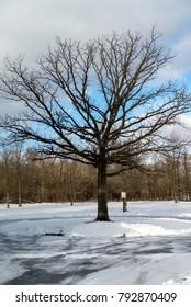 spooky tree winter park snow