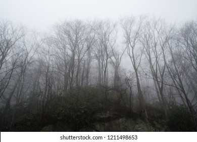 Spooky trees loom in the eerie mist of the mountains