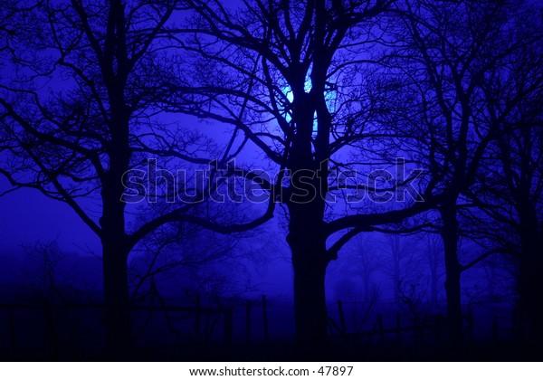 Spooky trees at night